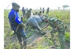 Armed Groups Line up to Kill Congo's Elephants