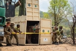 17 Black Rhino Moved From South Africa to Malawi