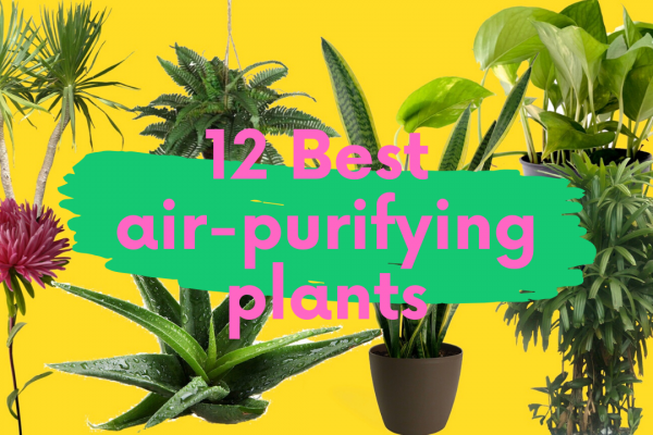 Best Indoor Plants to Purify the Air in Your Home