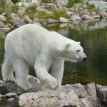 Siberia Witnessed Highest Temperature in the Northern Arctic Till Date