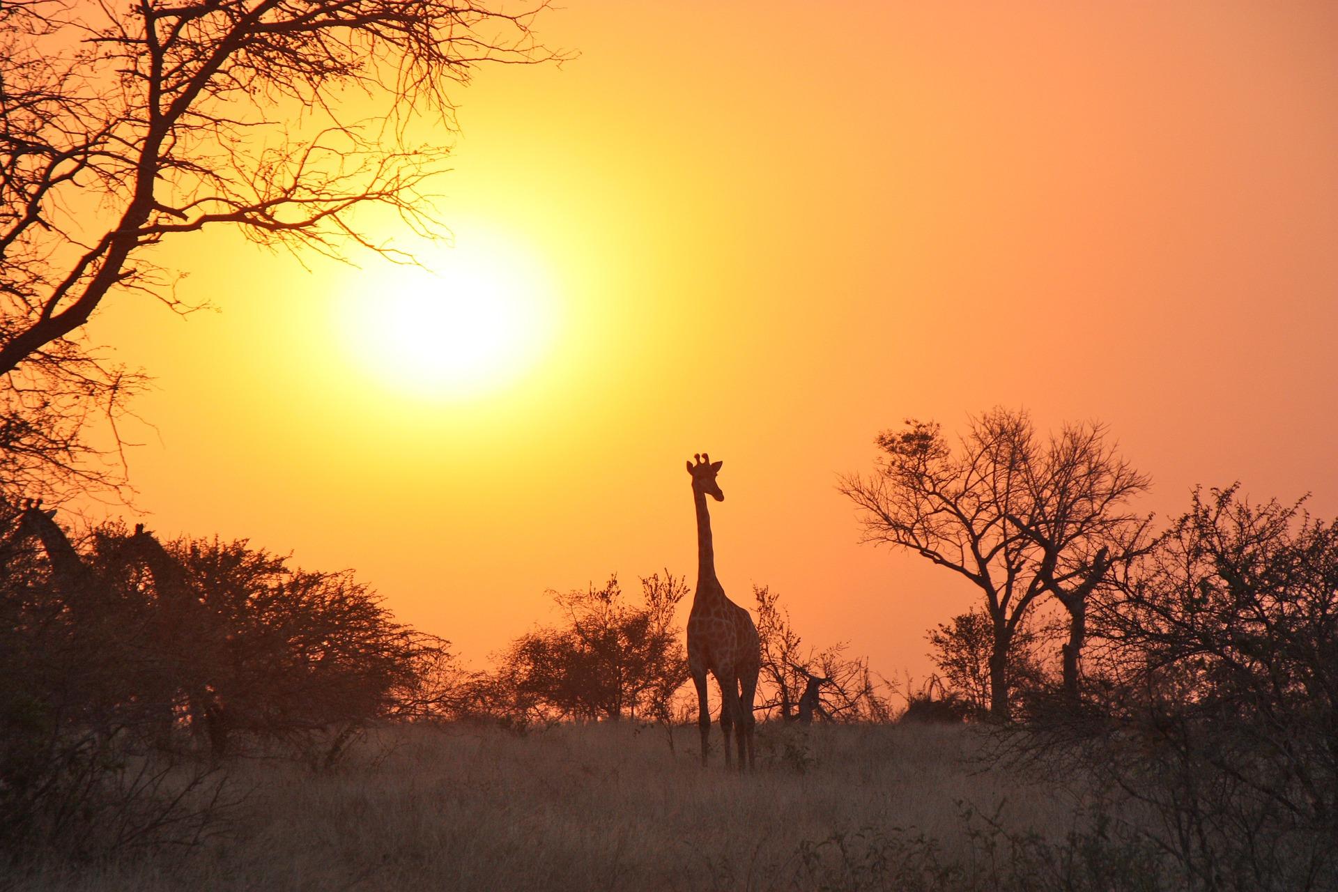 Zambia's Luangwa National Park
