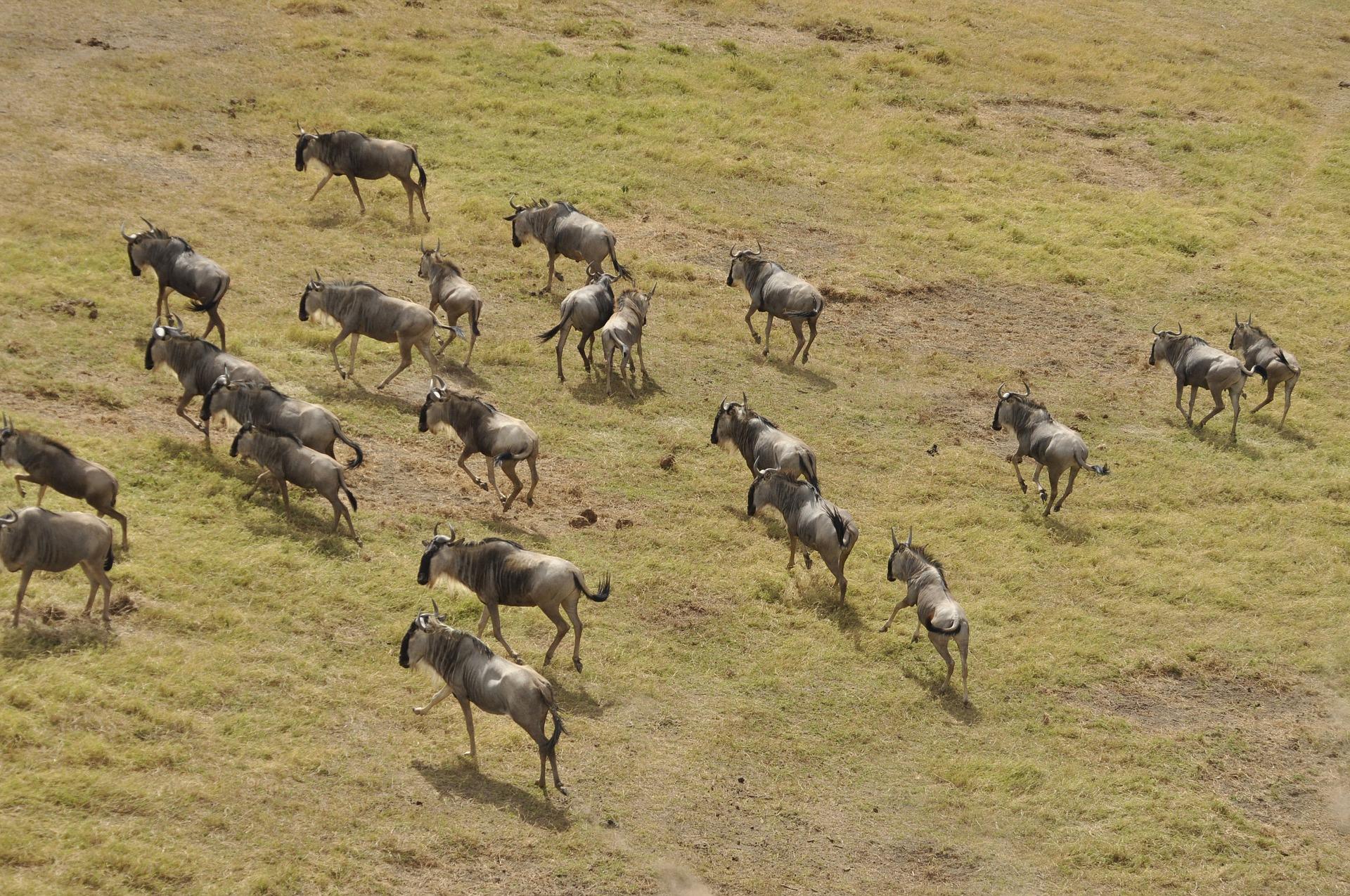 Kenya-Masai Mara National Reserve
